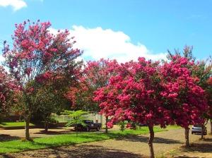 Árvores em Porto Alegre