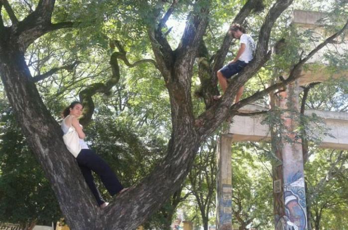 Estudantes subiram em algumas árvores para impedir o corte   Crédito: Sofia Cavedon / Especial CP