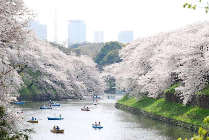 Ueno-park-tokyo--mesma-especie-de-arvores