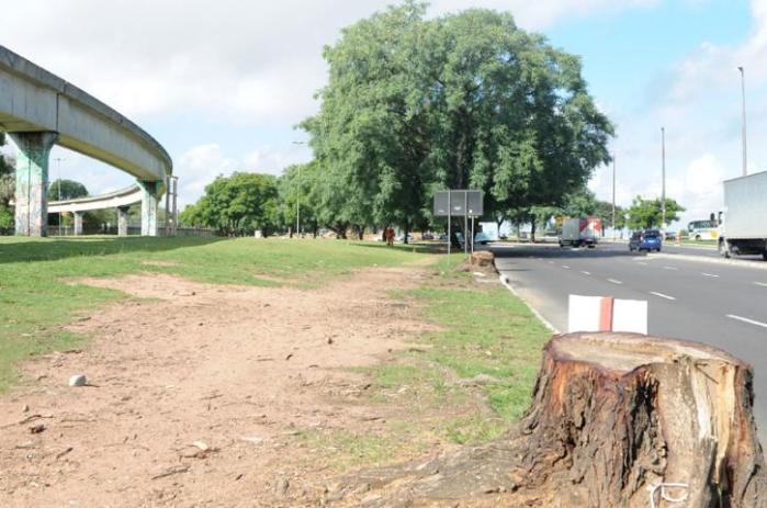 Impasse das árvores pode atrasar duplicação da Beira-Rio para a Copa   Crédito: Tarsila Pereira