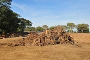 Após o corte de árvores, obras serão retomadas na segunda-feira  Crédito: André Ávila