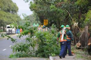 Corte de árvores ocorre para duplicação da avenida Beira-Rio  Crédito: Vinícius Roratto
