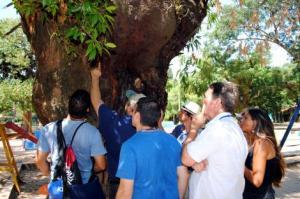 Serão analisadas 150 árvores de grande porte da cidade  Foto: Cibele Carneiro/Divulgação PMPA