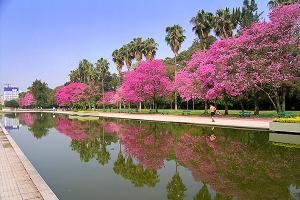 Parque Farroupilha. Espelho d'água. Foto: Gilberto Simon
