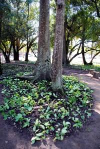 Foram plantadas espécies de diversos gêneros Foto: Sergio Louruz/Divulgação PMPA