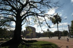 Árvores com risco de queda serão removidas na Capital  Crédito: Alexandre Mendez / CP Memória