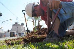 Dos 795 plantios, 685 mudas foram reposição a árvores que não brotaram Foto: Sérgio Louruz/Divulgação PMPA