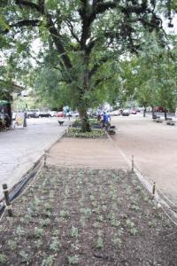Jardins agora terão mais flores e folhagens Foto: Sérgio Louruz/Divulgação/PMPA