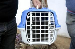 Cães ou gatos, com peso máximo de até 10 quilos, deverão estar higienizadosFto: Guerreiro/Divulgação PMPA
