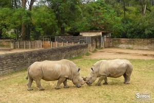 Zoo de Sapucaia é um dos maiores da América Latina. Foto: Gilberto Simon