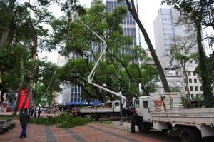 Árvores de grande porte são removidas no Centro de Porto Alegre | Foto: Samuel Maciel