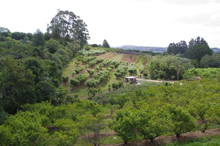 Área rural fica na Zona Sul da cidade. Foto: Luciano Lanes / PMPA