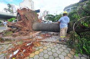 Há muitas árvores caídas pela cidade, como em frente à Ufrgs | Foto: Alina Souza