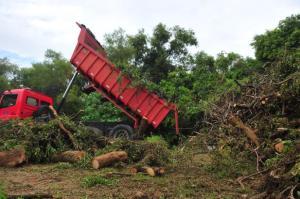 Material está sendo levado para a estação de transbordo da Lomba do Pinheiro e para o Parque Harmonia | Foto: Alina Souza