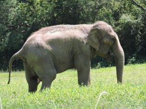 Elefanta é o animal mais antigo no zoo e conta com cuidados especiais | Foto: Fernanda Bassôa / Especial / CP