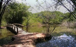Jardim Botânico de Porto Alegre. Foto: Gilberto Simon