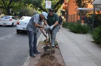 SMC - Plantio de Árvores