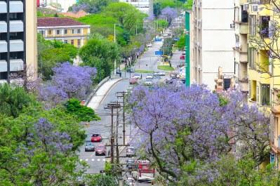 SMAMS - Projeto Árvore do Mês